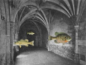Crypt with Air Fish